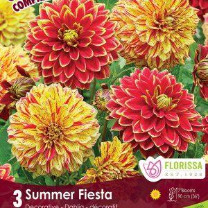 CC Summer Fiesta